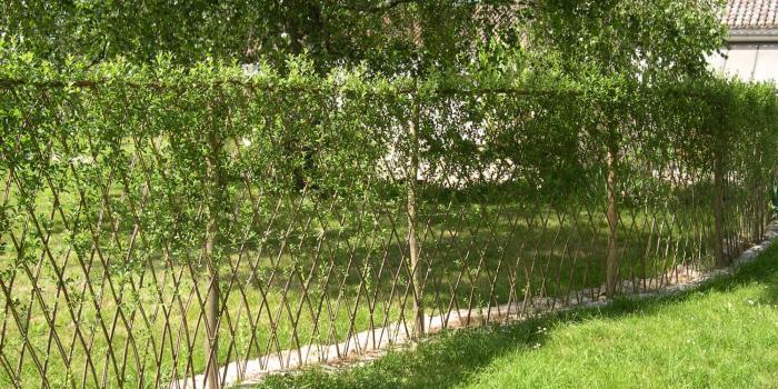 La clairière aux paniers | Un brin de nature sous la main